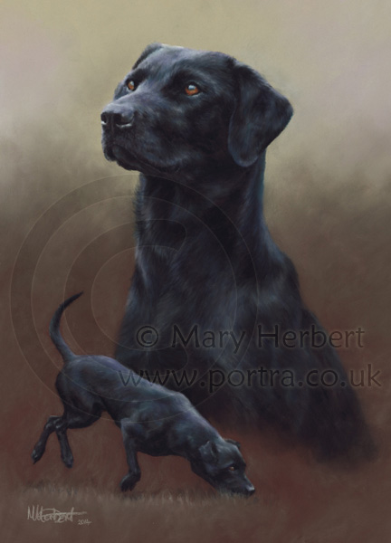 black labrador portrait by Mary Herbert