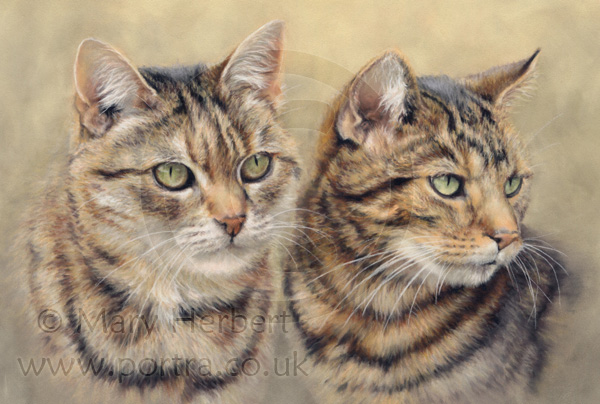 Tabby cats portrait by Mary Herbert