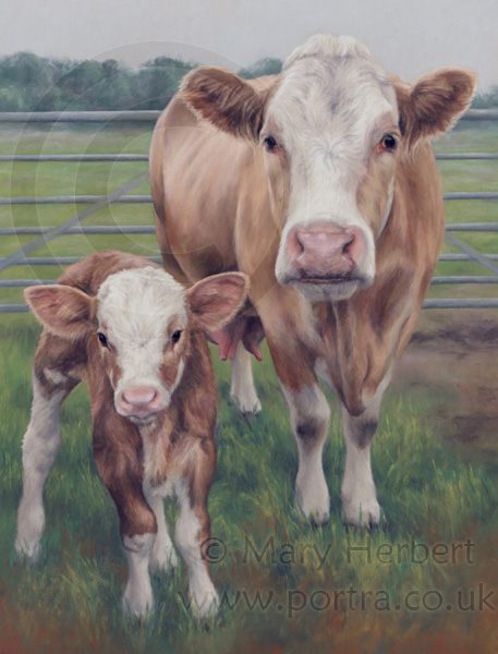 cow and calf portrait by Mary Herbert