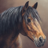 pictures of horses and ponies in the gallery of equine portraits