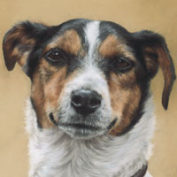 pictures of dogs in the gallery of canine portraits